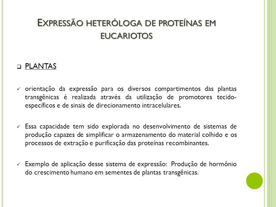 Expressão heteróloga de proteínas em eucariotos