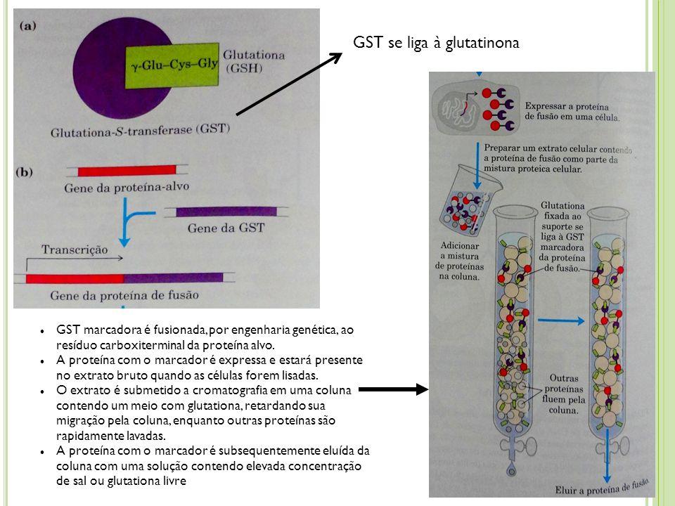 GST se liga à glutatinona