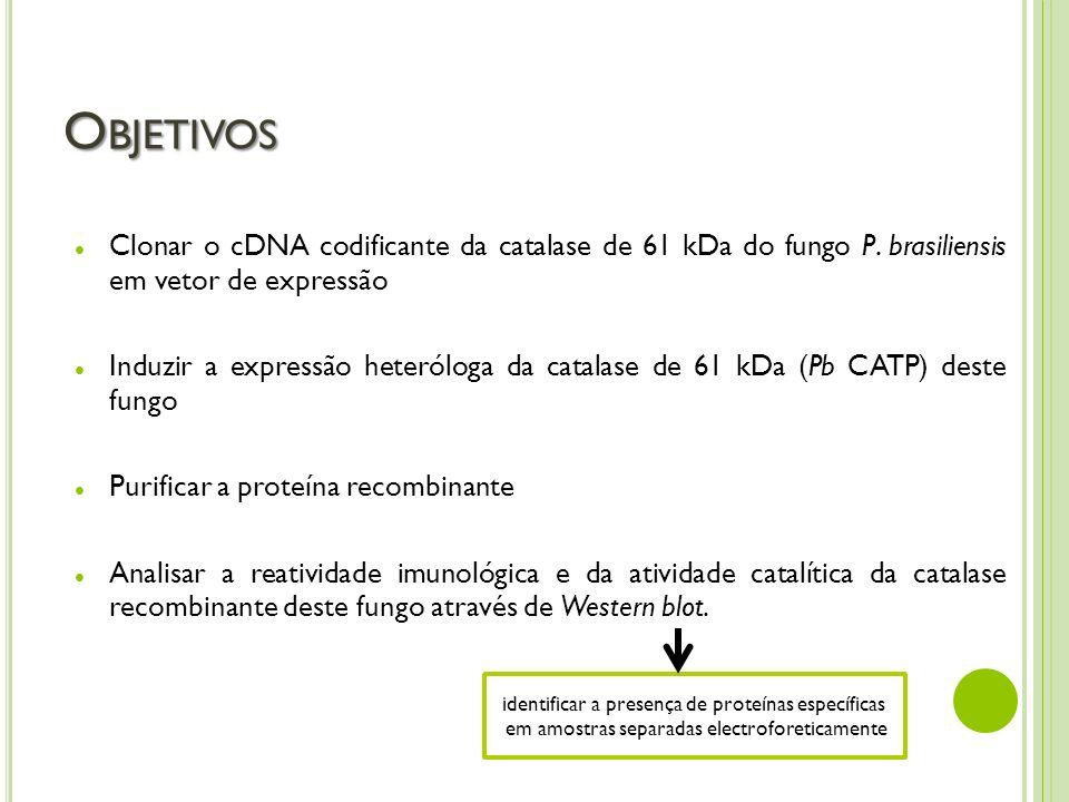 Objetivos Clonar o cDNA codificante da catalase de 61 kDa do fungo P. brasiliensis em vetor de expressão.