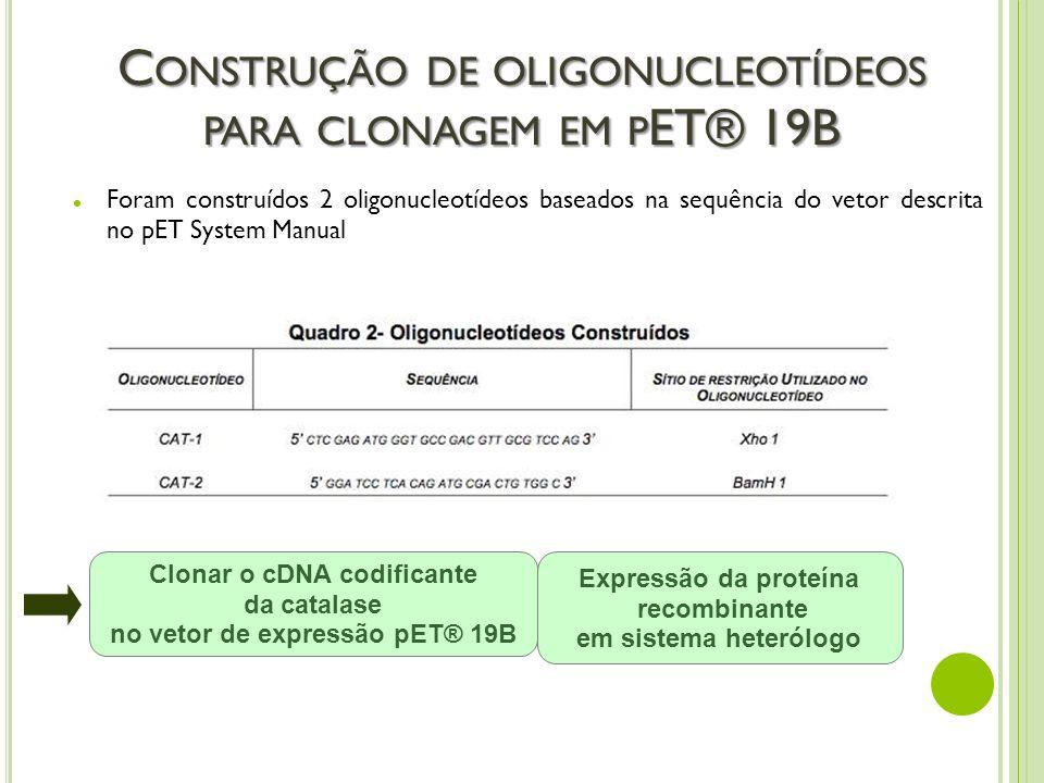 Construção de oligonucleotídeos para clonagem em pET® 19B