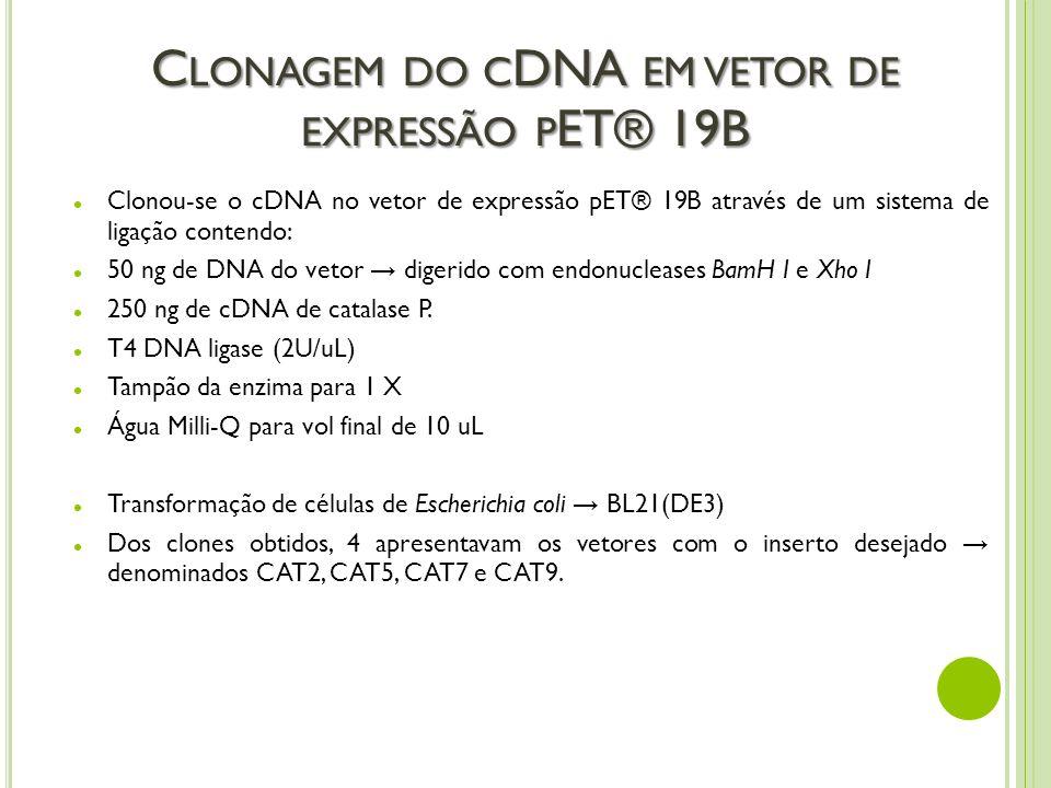Clonagem do cDNA em vetor de expressão pET® 19B