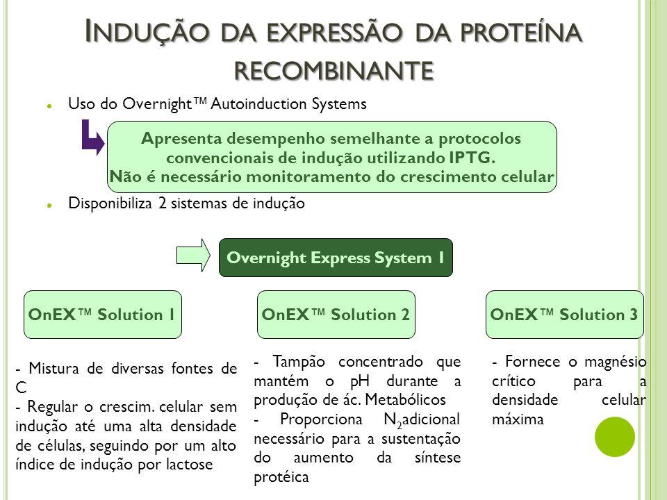 Indução da expressão da proteína recombinante
