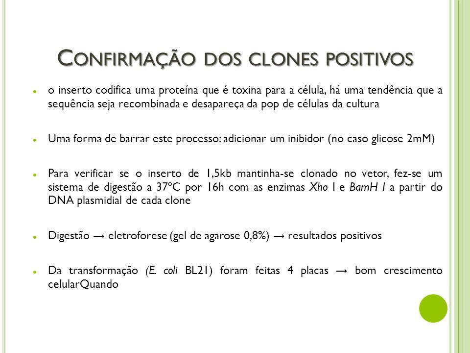 Confirmação dos clones positivos