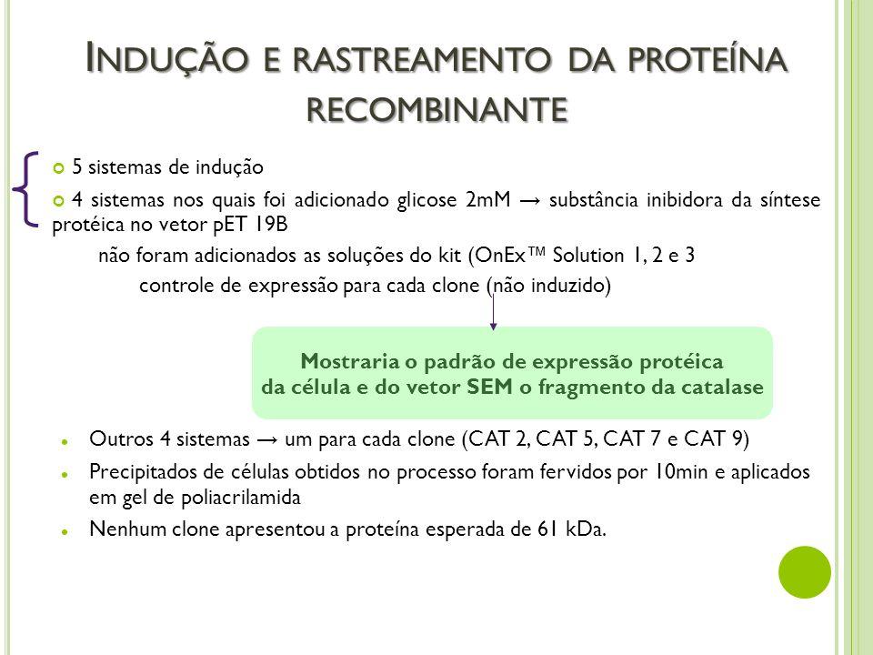 Indução e rastreamento da proteína recombinante