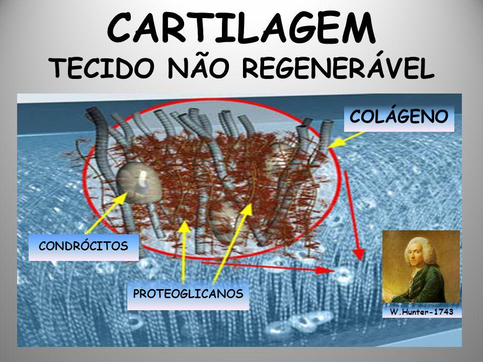CARTILAGEM TECIDO NÃO REGENERÁVEL