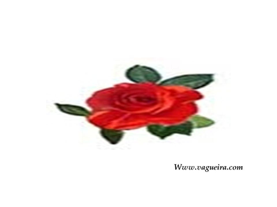 Www.vagueira.com