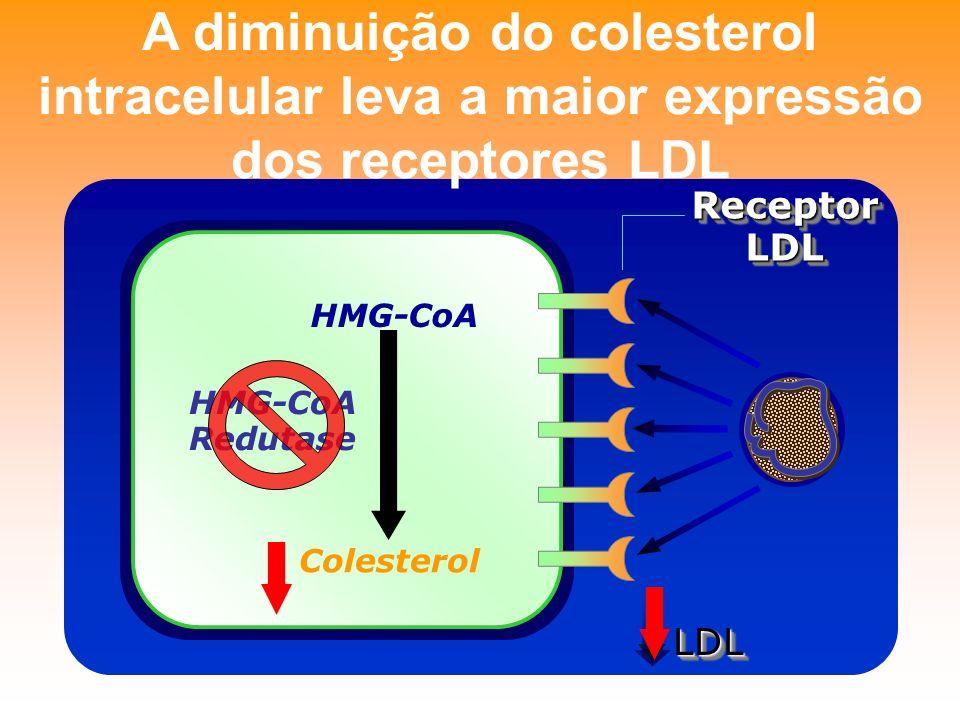 A diminuição do colesterol intracelular leva a maior expressão dos receptores LDL