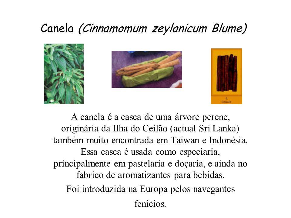 Canela (Cinnamomum zeylanicum Blume)