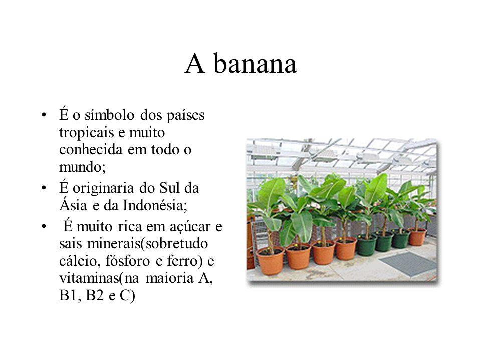 A banana É o símbolo dos países tropicais e muito conhecida em todo o mundo; É originaria do Sul da Ásia e da Indonésia;