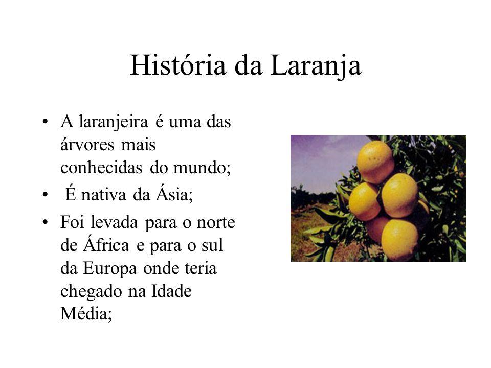 História da Laranja A laranjeira é uma das árvores mais conhecidas do mundo; É nativa da Ásia;