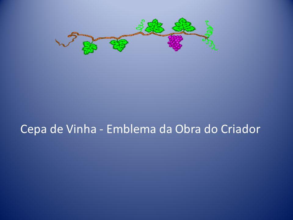 Cepa de Vinha - Emblema da Obra do Criador