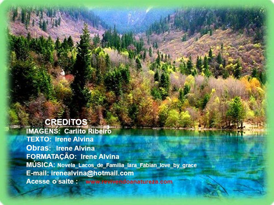 CREDITOS Obras: Irene Alvina IMAGENS: Carlito Ribeiro