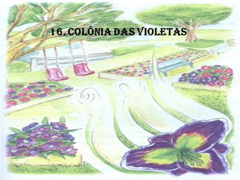 16. COLÔNIA DAS VIOLETAS