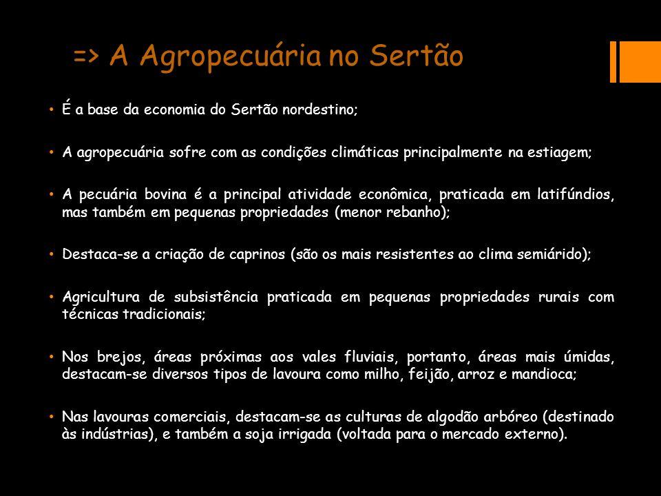 => A Agropecuária no Sertão