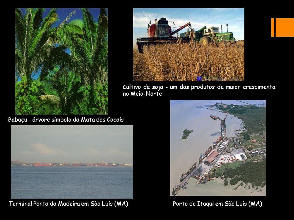 Cultivo de soja - um dos produtos de maior crescimento no Meio-Norte