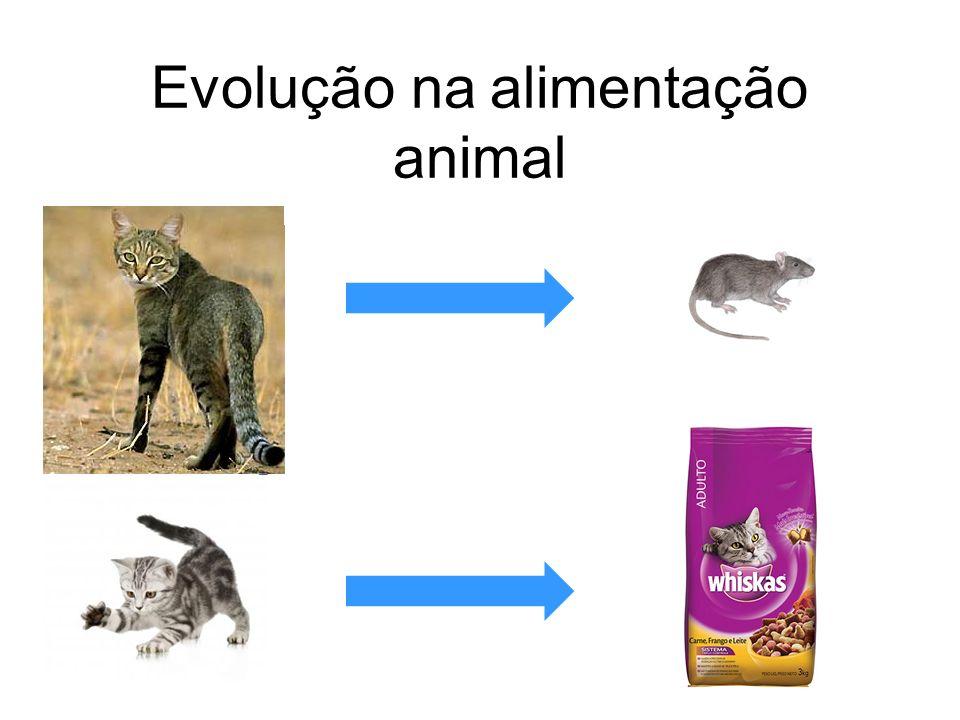 Evolução na alimentação animal