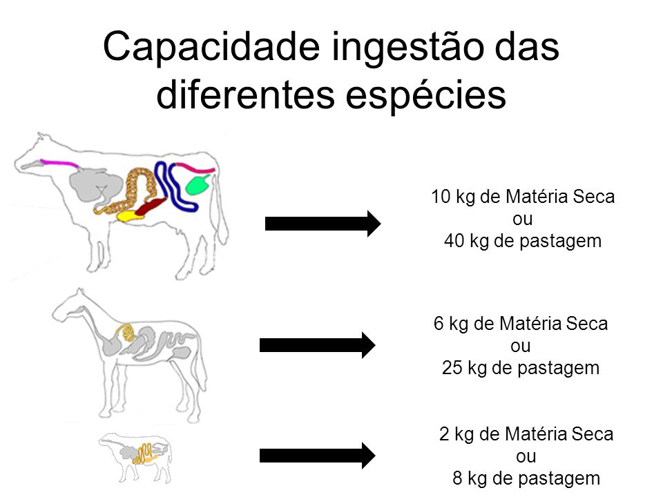 Capacidade ingestão das diferentes espécies