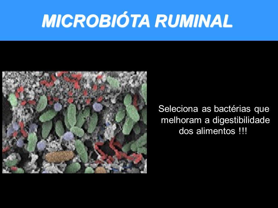 MICROBIÓTA RUMINAL Seleciona as bactérias que