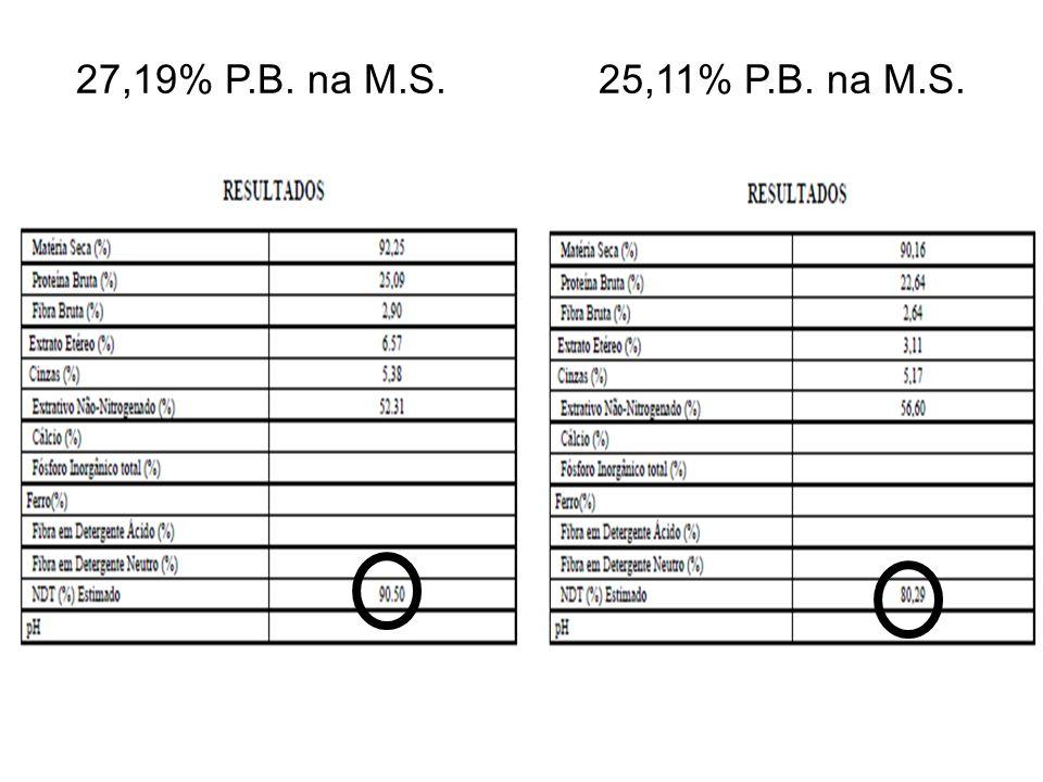 27,19% P.B. na M.S. 25,11% P.B. na M.S.
