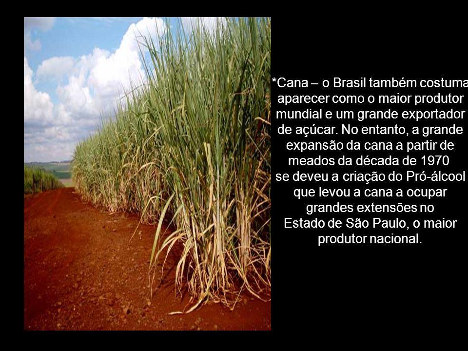 *Cana – o Brasil também costuma aparecer como o maior produtor