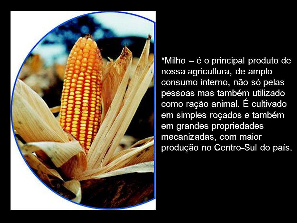 *Milho – é o principal produto de