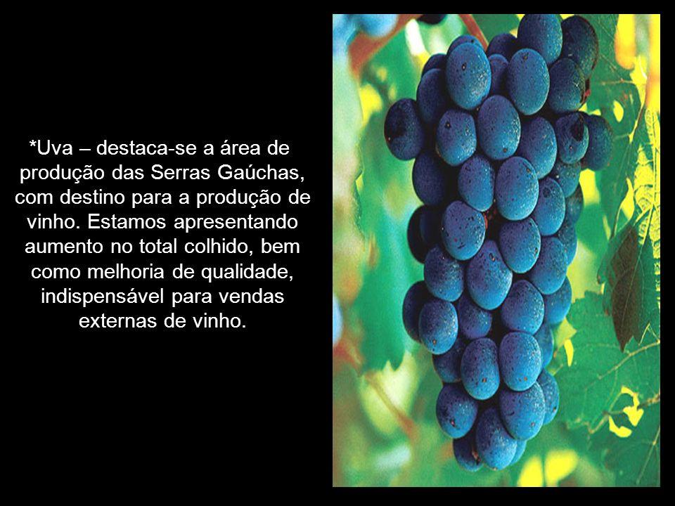 *Uva – destaca-se a área de produção das Serras Gaúchas,