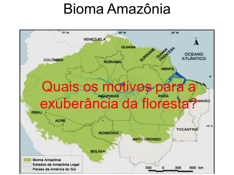 Quais os motivos para a exuberância da floresta