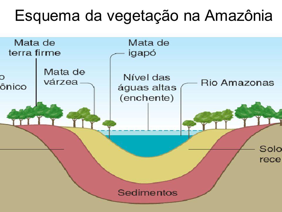 Esquema da vegetação na Amazônia