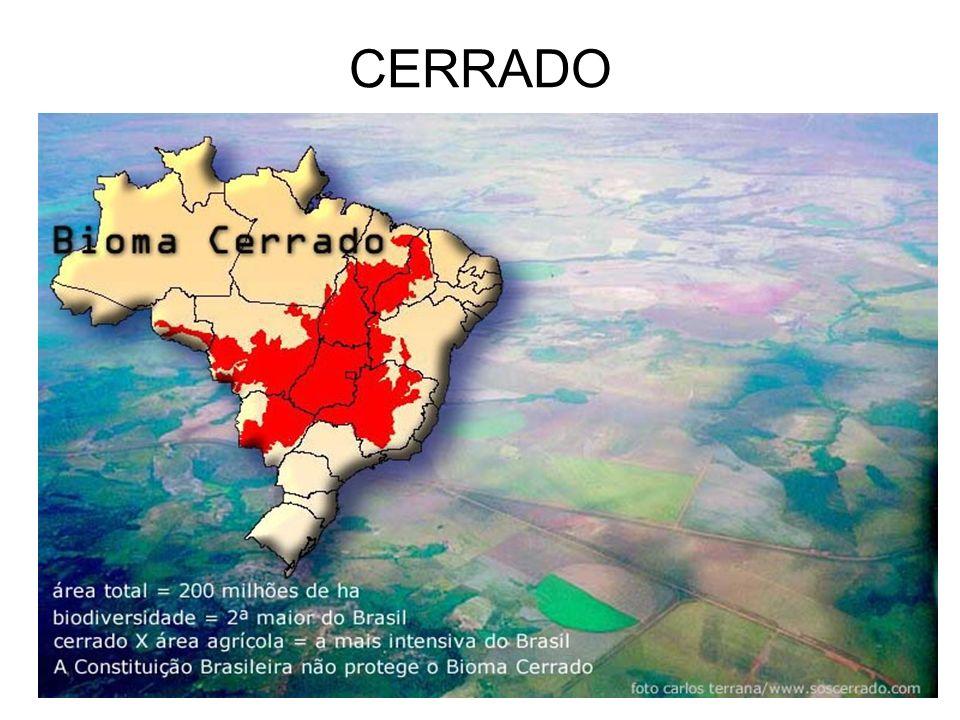 CERRADO