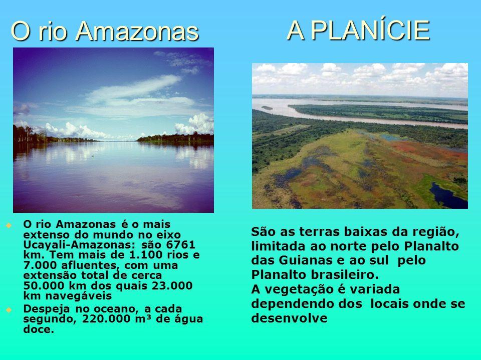 O rio Amazonas A PLANÍCIE