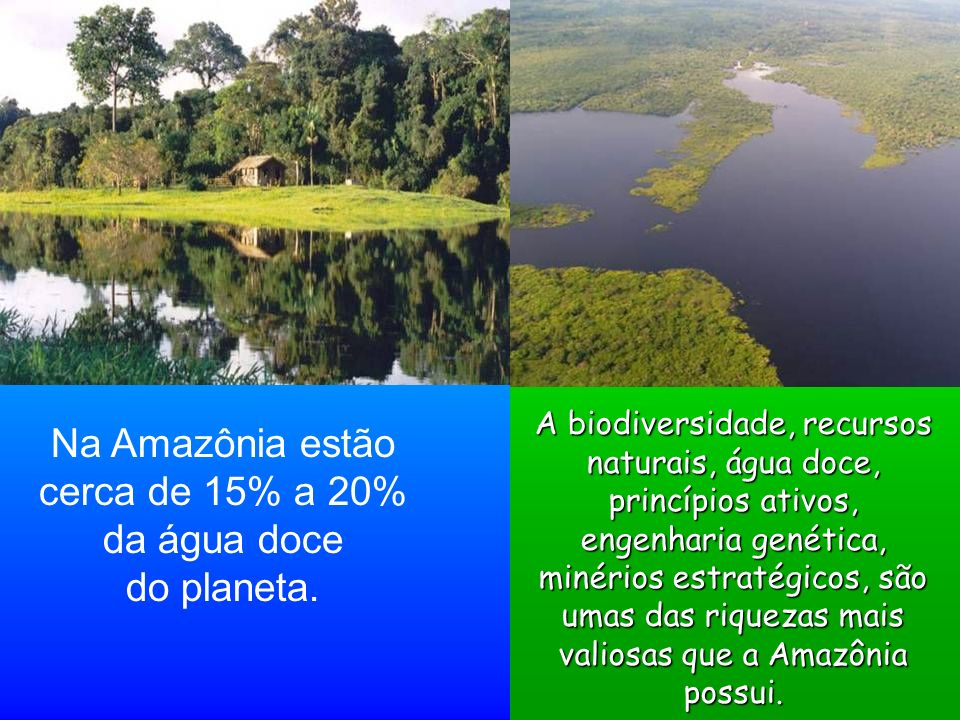 Na Amazônia estão cerca de 15% a 20% da água doce