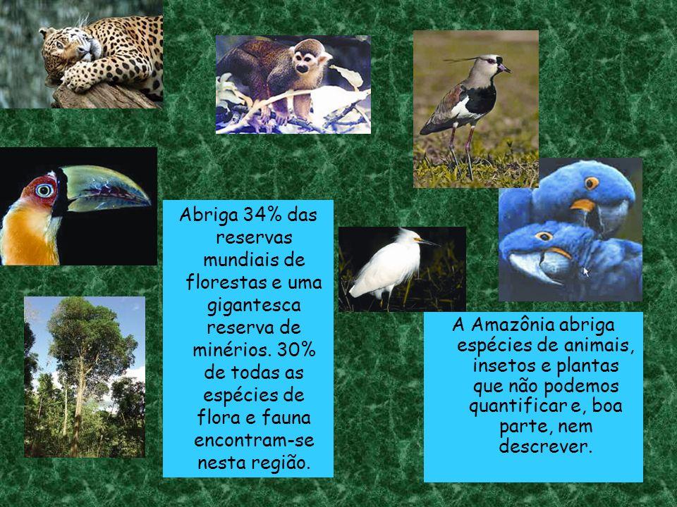 Abriga 34% das reservas mundiais de florestas e uma gigantesca reserva de minérios. 30% de todas as espécies de flora e fauna encontram-se nesta região.