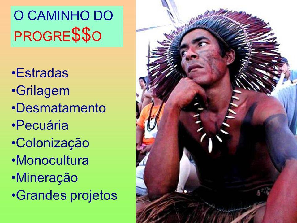 O CAMINHO DO PROGRE$$O Estradas Grilagem Desmatamento Pecuária
