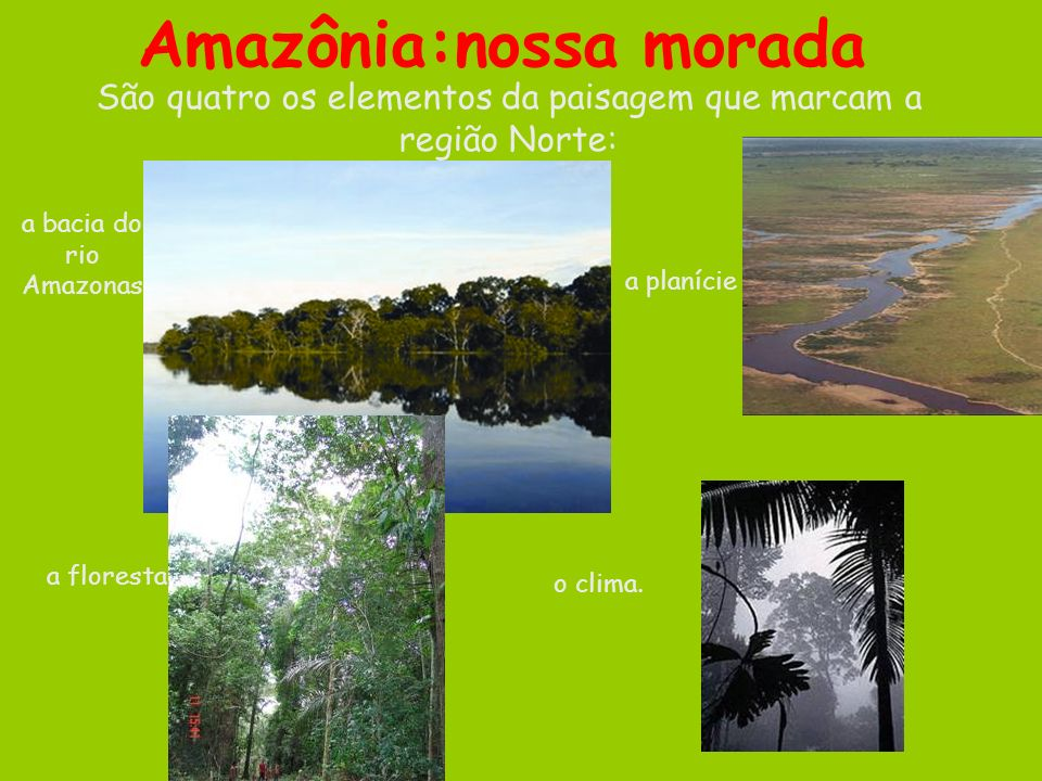 Amazônia:nossa morada