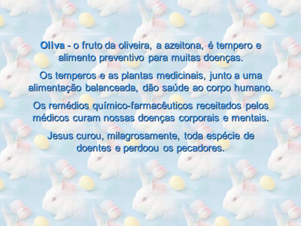 Oliva - o fruto da oliveira, a azeitona, é tempero e alimento preventivo para muitas doenças.