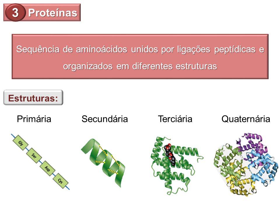 Proteínas 3. Sequência de aminoácidos unidos por ligações peptídicas e organizados em diferentes estruturas.