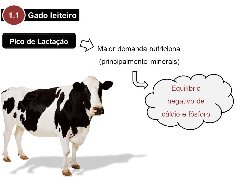 1.1 Gado leiteiro Pico de Lactação Maior demanda nutricional