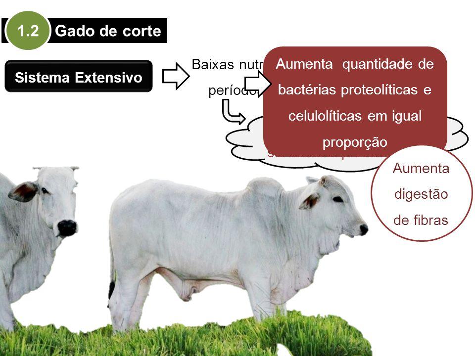 1.2 Gado de corte Baixas nutricionais em períodos de seca