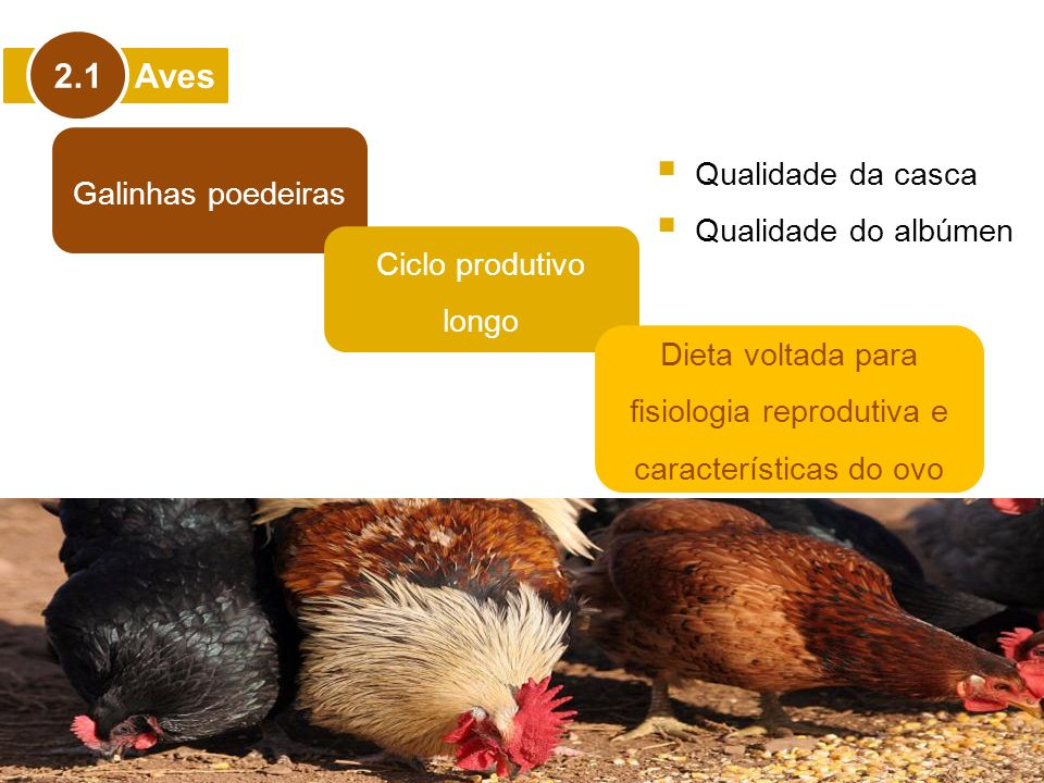 Dieta voltada para fisiologia reprodutiva e características do ovo