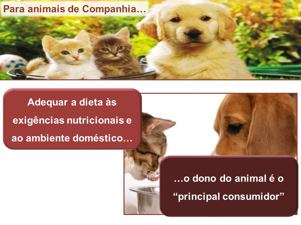 Para animais de Companhia…