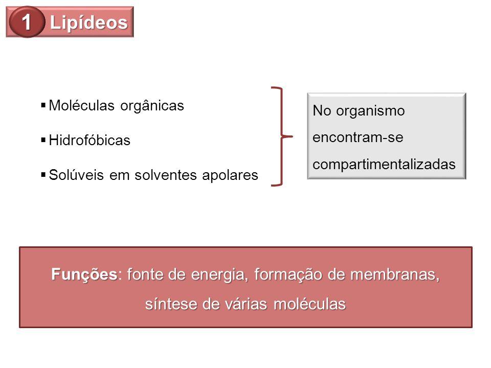 Lipídeos 1. Moléculas orgânicas. No organismo encontram-se compartimentalizadas. Hidrofóbicas. Solúveis em solventes apolares.