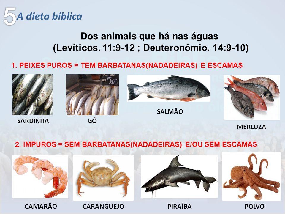 5 A dieta bíblica Dos animais que há nas águas
