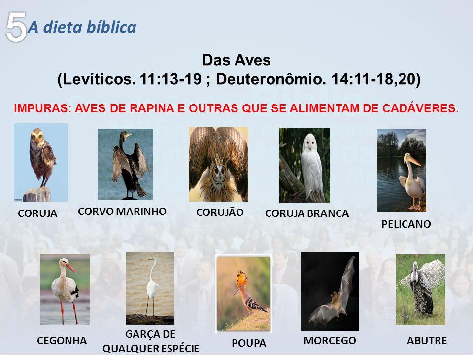 5 A dieta bíblica Das Aves
