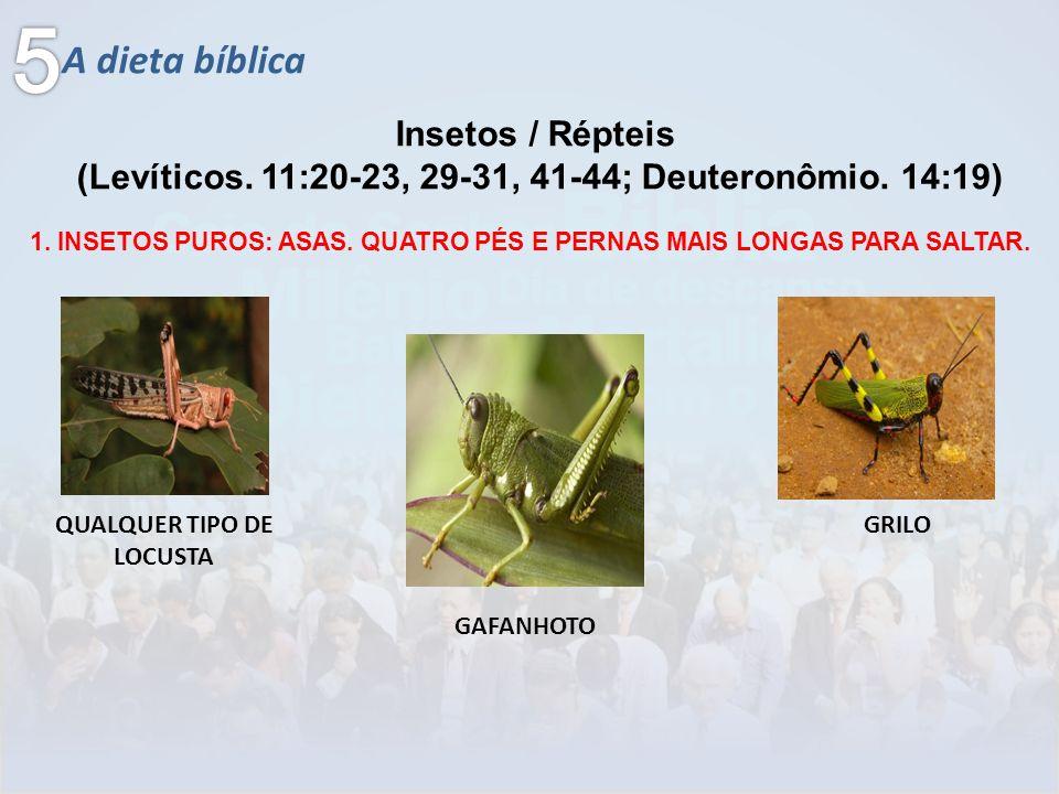 5 A dieta bíblica Insetos / Répteis