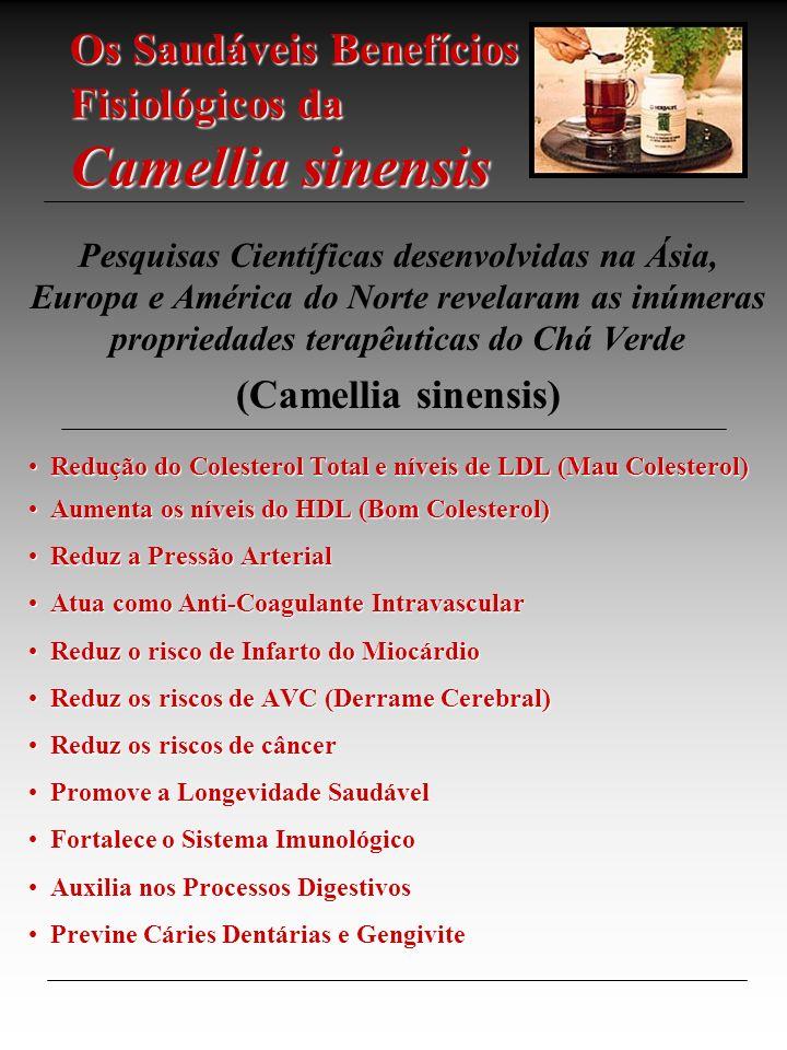 Os Saudáveis Benefícios Fisiológicos da Camellia sinensis