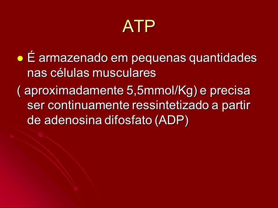 ATP É armazenado em pequenas quantidades nas células musculares