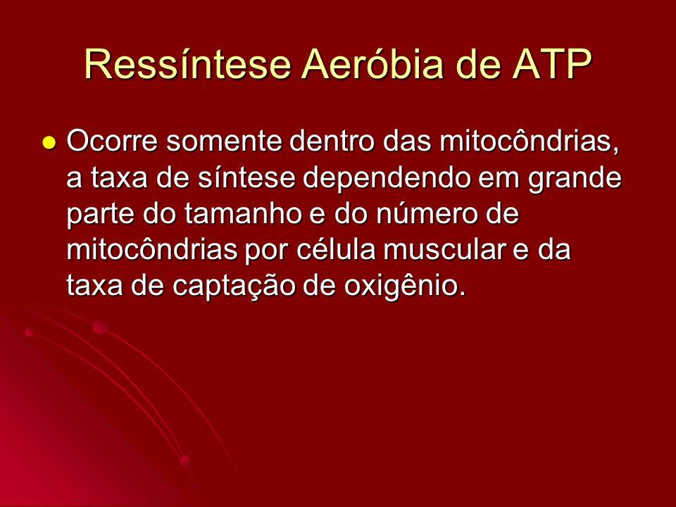 Ressíntese Aeróbia de ATP
