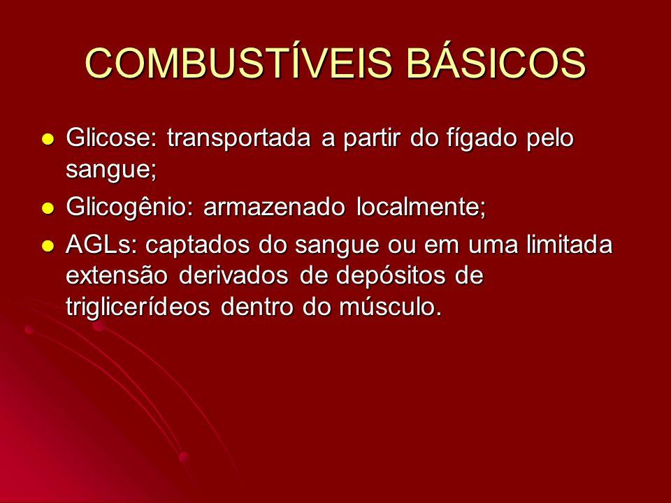 COMBUSTÍVEIS BÁSICOS Glicose: transportada a partir do fígado pelo sangue; Glicogênio: armazenado localmente;