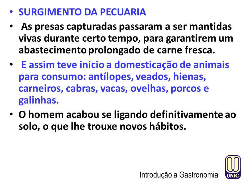 SURGIMENTO DA PECUARIA