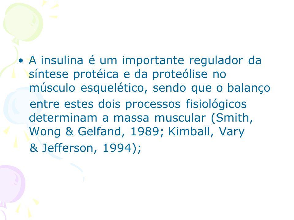 A insulina é um importante regulador da síntese protéica e da proteólise no músculo esquelético, sendo que o balanço